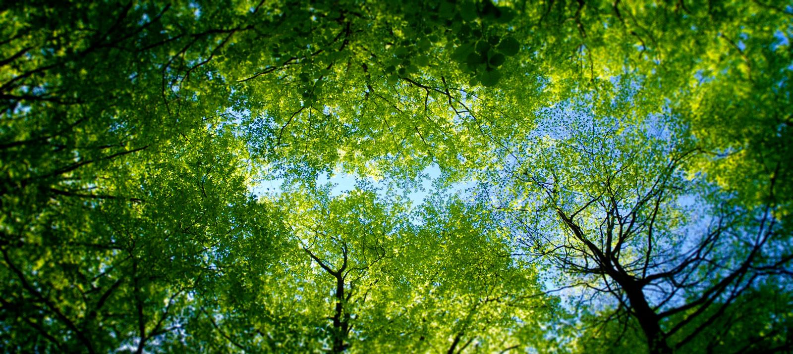 banner-sustentabilidade